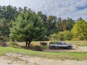 White Pine Harvest