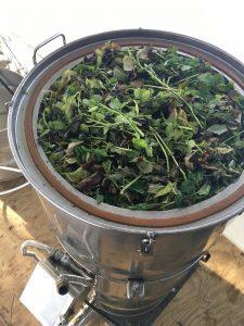Melissa Lemon Balm Distillation