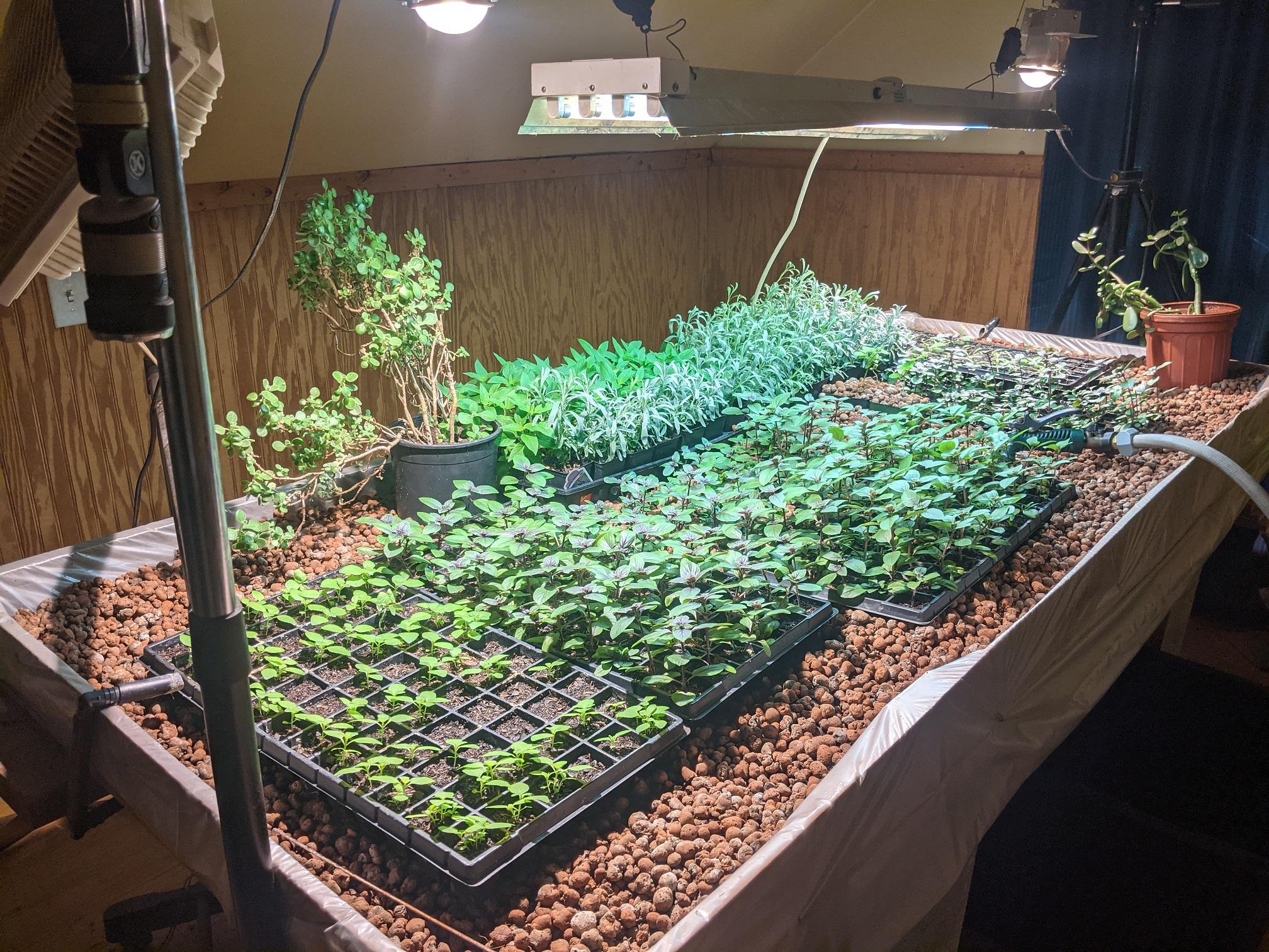 Hundreds of Plant Starts